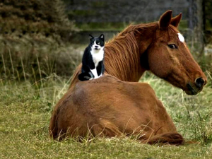 cat-on-horse1